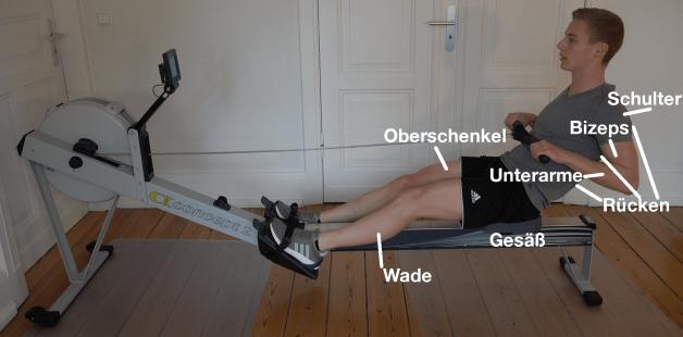 Rudergerät Training Welche muskeln werden trainiert