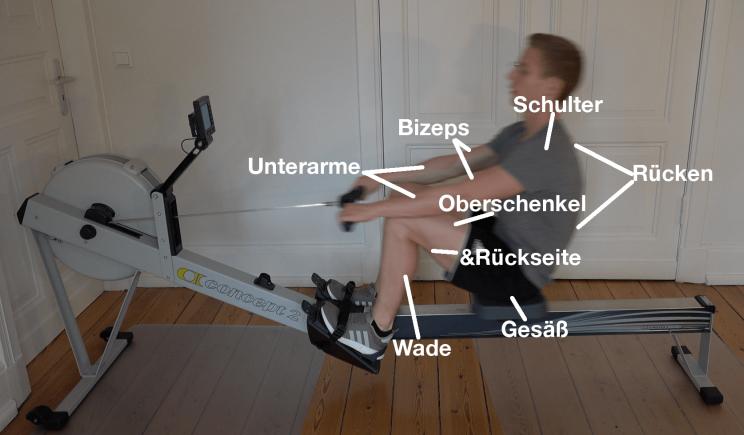 Rudertraining welche Muskeln