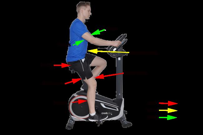 Ergomter Training muskeln