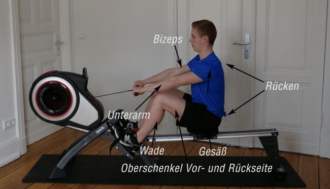 Muskeln Rudergerät