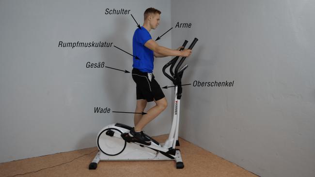 Muskeln Crosstrainer