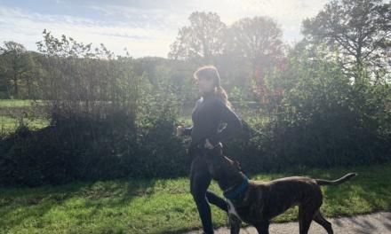 Sport mit Hund – ein Training mit dem Vierbeiner