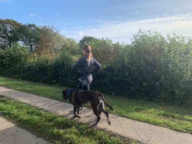walking sport mit hund